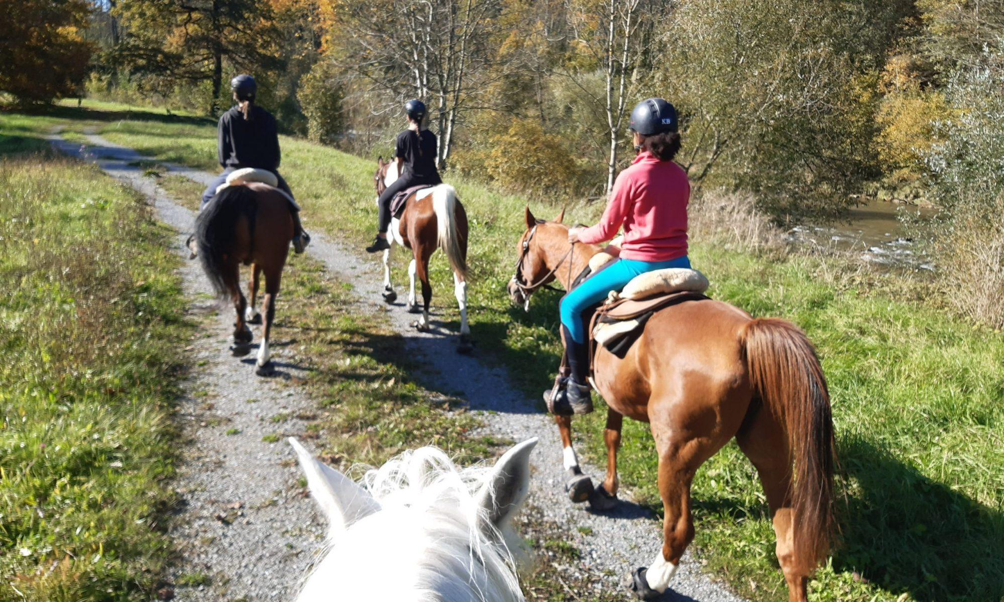 Freizeit Pferde